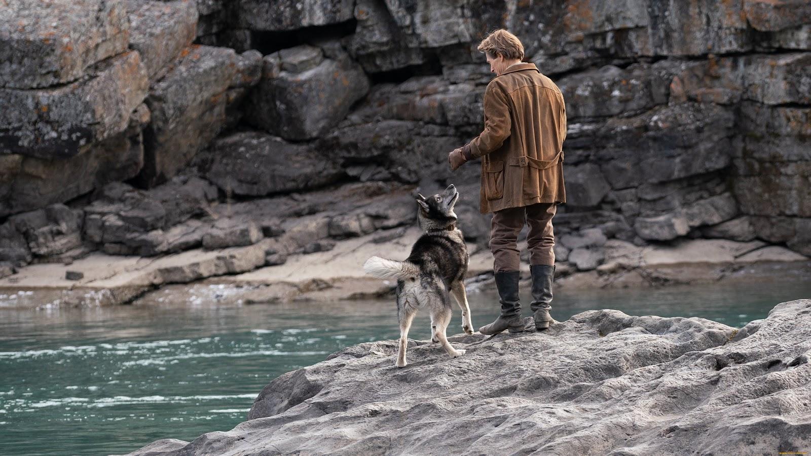 Не хуже «Хатико»: 10 фильмов, после которых хочется завести собаку